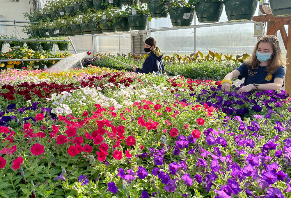 Victoria Sprague (Keystone) and Emily Wells (Midview), landscape and greenhouse management seniors, tend to the flowers for their spring sale event.