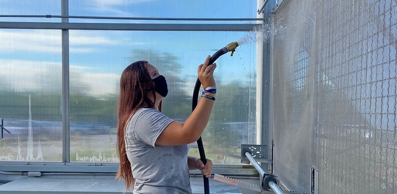 Female student, wearing a mask, sprays greenhouse walls